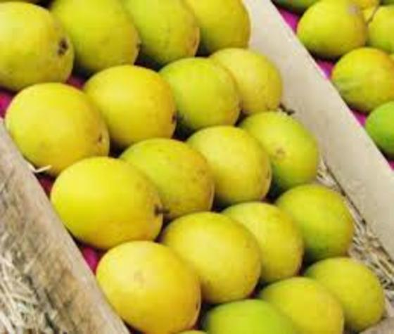 Mangoes in Singapore